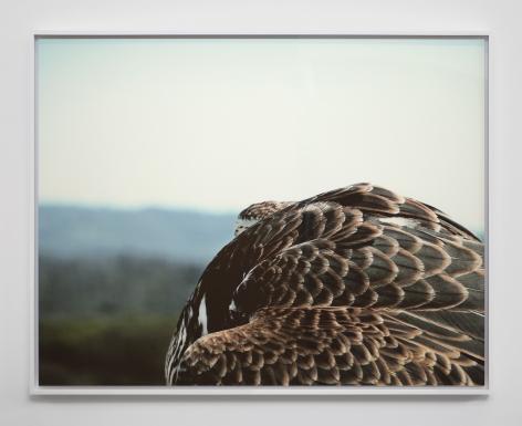 Liza Ryan, Round Falcon