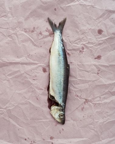 Claus Goedicke, Fisch, 2014