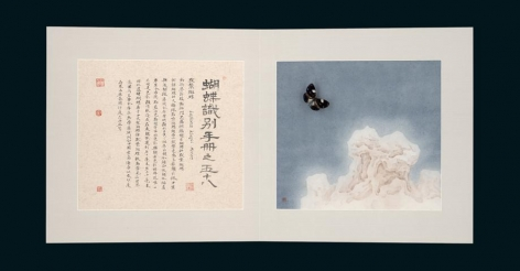 , Hang Chunhui, Identification Manual of Butterflies 58, 2015, ink and color on paper, butterfly specimens, 14.6 x 32.3 inches/37 x 82 cm