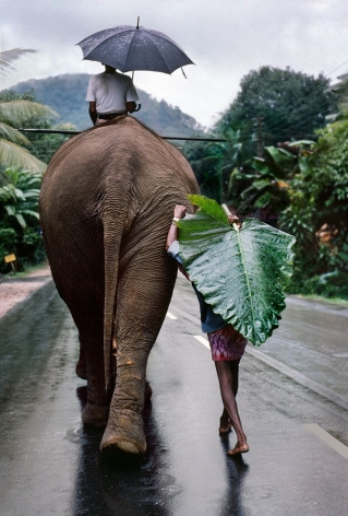 A young farmer walks next to an elephant, Kandy, Sri Lanka, 1995, ultrachrome print, 60 x 40 inches/152.4 x 101.6 cm
