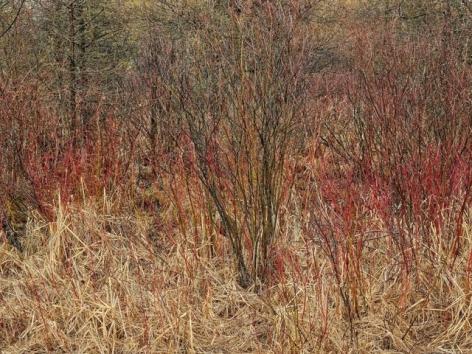 Edward Burtynsky, Natural Order #14, 2020, chromogenic color print, 48 x 64 inches/122 x 162.6 cm