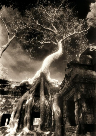 """Twisted Tree, Ta Prohm"", Silver Gelatin, 20 x 16"""