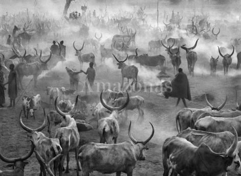 , Sebastião Salgado. Dinka cattle camp of Amak. Southern Sudan. 2004. Gelatin silver print. 180 x 125 cm.