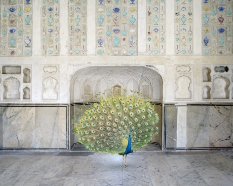 Karen Knorr, Master of Seduction, Amer Fort, Amer, 2017, 48 x 60 inches/122 x 152 cm