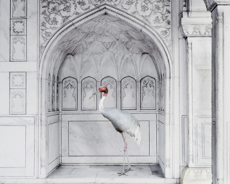 Karen Knorr, Homage to Ustad Mansur, Red Fort, Agra,2017, colour pigment print on Hahnemühle Fine Art Pearl Paper, 48 x 60 inches/122 x 152 cm
