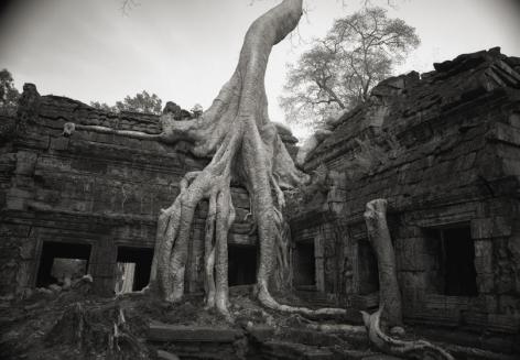 Kenro Izu, Angkor #26, 1993, archival pigment print, 36 x 48 inches; © Kenro Izu