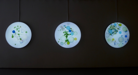 Milk Bacteria, 2019, lightbox, collection-grade digital micro-jet, 47.2 inches/120 cm tondo each
