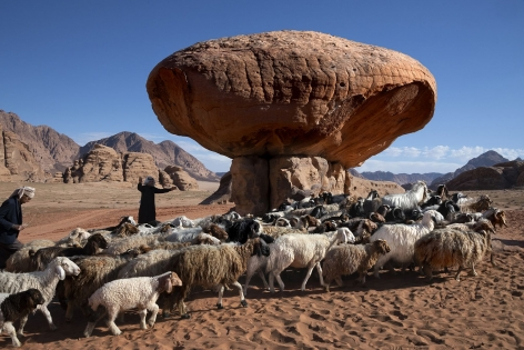 Shepherds lead their flock across the Wadi Rum desert, Jordan, 2019,chromogenic print, 20 x 24 inches/50.8 x 61 cm