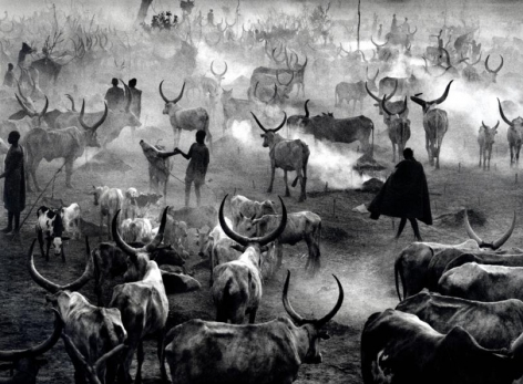 Dinka Cattle Camp of Amak at the End of the Day © Sebastião Salgado/Amazonas Images, 2006