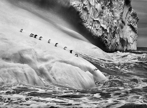 Chinstrap penguins on an iceberg, between Zavodovski and Visokoi islands, South Sandwich Islands, 2009, gelatin silver print, 24 x 35 inches/61 x 89 cm