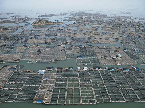 Edward Burtynsky, Marine Aquaculture #1, Luoyuan Bay, Fujian Province, China, 2012, Chromogenic color print, 122 x 162.6 cm, Edition 1/6