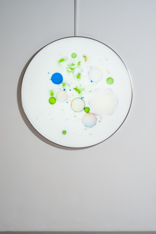 Milk Bacteria, 2019, lightbox, collection-grade digital micro-jet, 47.2 inches/120 x 120 cm