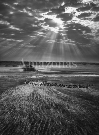 , Sebastião Salgado. Herd of buffalos. Kafue National Park, Zambia. 2010. Gelatin silver print. 180 x 125 cm. © Sebastião Salgado/Amazonas Images