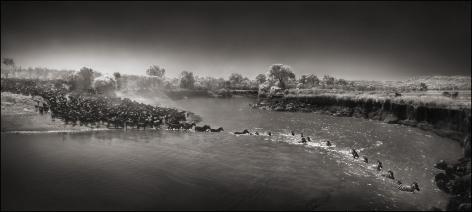 Zebras Crossing River, Maasai Mara, 2006, 14 x 31 Inches, Archival Pigment Print, Edition of25