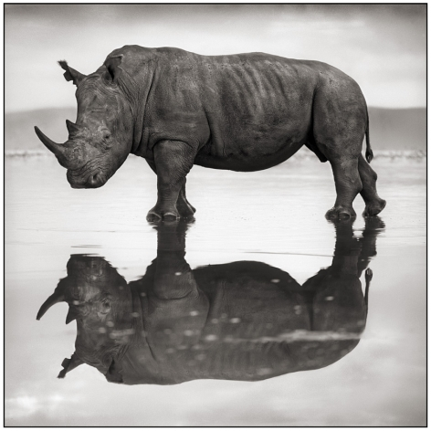 Rhino on Lake, Nakuru,2007, Platinum Print