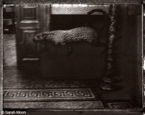 Le Guepard, 2000, 15-3/4 x 19-1/2 Toned Silver Gelatin Photograh, Ed. 20