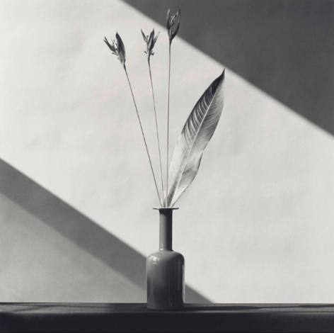 Robert Mapplethorpe Flower, 1982