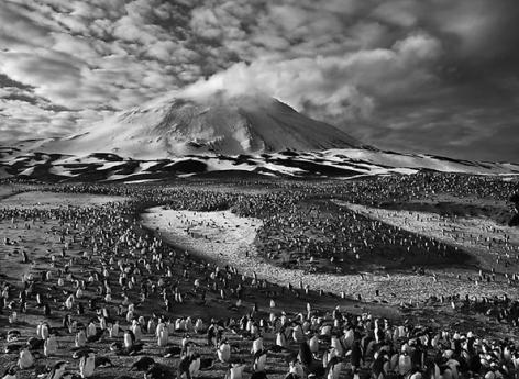 Macaroni Penguins in Zavodovski Island, The Sandwich Islands, 2009, 16 x 20 inches, Silver Gelatin Photograph