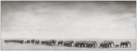 Elephant Train, 2008, 11 1/4 x 31 Inches, Archival Pigment Print, Edition of25