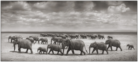 Two Elephant Herds Crossing Lake Bed, Amboseli, 2008, 13 1/2 x 30 Inches, Archival Pigment Print, Edition of25
