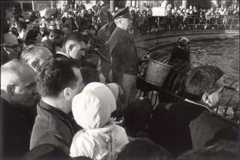 New York City (Seal Looking at Camera), 1963, 11 x 14 Silver Gelatin Photograph