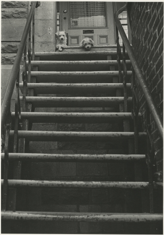 Guard Dogs, Avenue Mont Royal, Montreal, 1999, Silver Gelatin Photograph