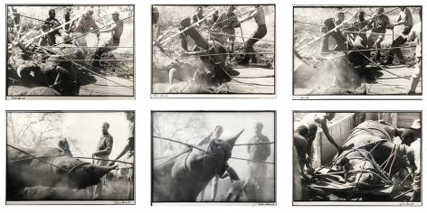 Peter Beard, Roping Rhino(Sequence of 6 photographs), 1968