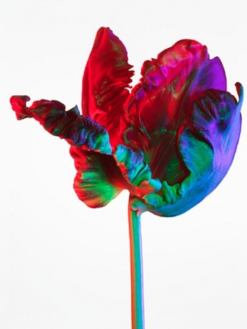 Hothouse #840, 20 X 15 inches, Archival Pigment Print, Edition of 2545 X 35 inches, Archival Pigment Print, Edition of 2558 X 45 inches, Archival Pigment Print, Edition of 25