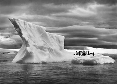 Penguins, Paulet Island, Antarctica, 16 x 20 inches, Silver Gelatin Photograph