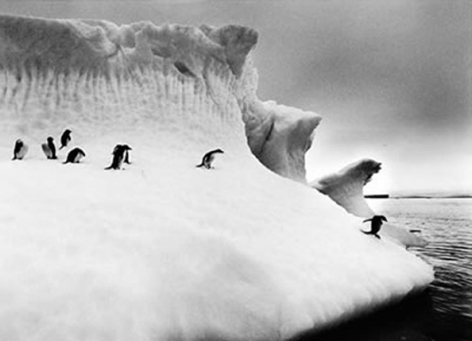 Penguins, Iceberg, Antarctica, 16 x 20 inches, Silver Gelatin Photograph