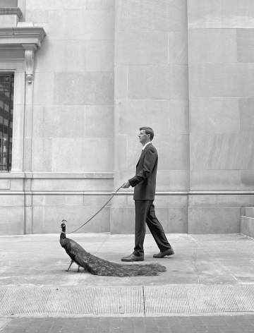 Man Walking a Peacock, 2001, Archival Pigment Print