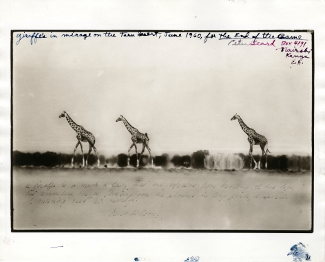 Giraffes in the Mirage on the Taru Desert, June, 1960  , Silver Gelatin Photograph with Ink