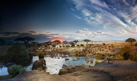 Serengeti National Park, Tanzania, 2015, C-Type Print