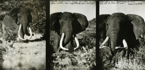 Marsabit, March (Elephant Triptych), 1962