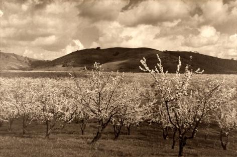 Ansel Adams Santa Clara Valley, California, 1950
