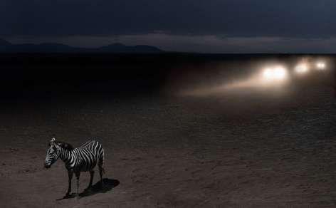 ZEBRA WITH HEADLIGHTS, 2018,