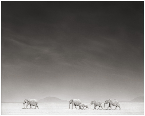 Elephants in Bleached Sunlight, Amboseli, 2008, 20 1/4 x 25 3/8 Inches, Archival Pigment Print, Edition of25