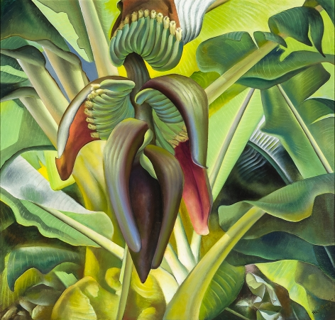 ROSS EUGENE BRAUGHT (1898–1983)  Banana Tree  Oil on canvas, 43 x 43 in.