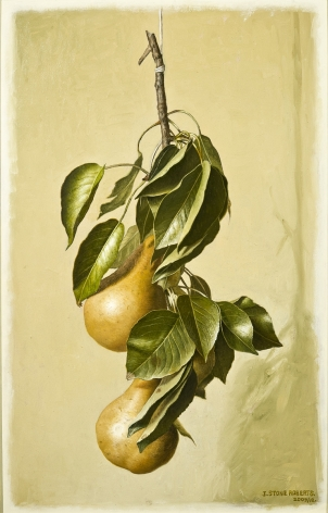 A Long Branch with Leaves and Two Pears, 2009/12, Oil on board, 14 3/4 x 9 1/2 in.