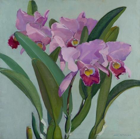 Jane Peterson (1876-1965) , Cattleya Orchids