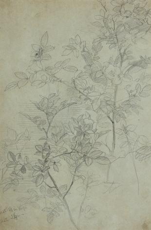 William Trost Richards (1833-1905), Flowering Branches, circa 1860