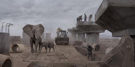 nick brandt, bridge construction with elephants & excavator