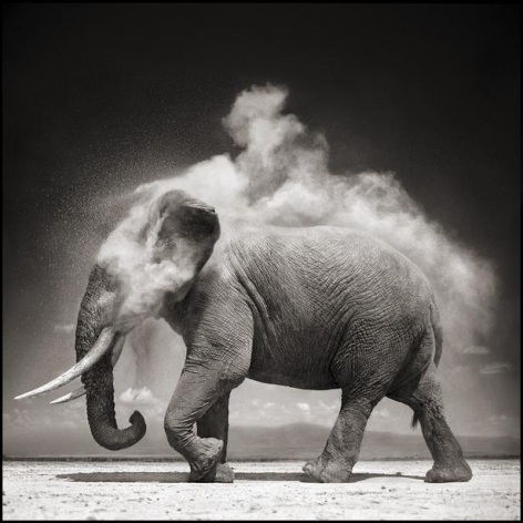 nick brandt elephant with exploding dust amboseli