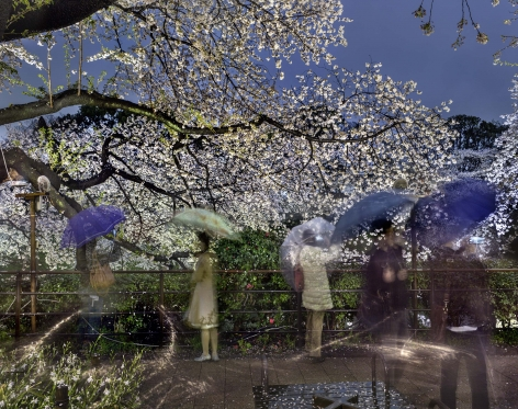 Matthew Pillsbury, Hanami #2, Chidorigafuchi, Thursday, April 3rd, 2014