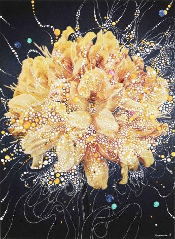 sebastiaan bremer Azalea Mollis x Sinensis Christoffel Wren