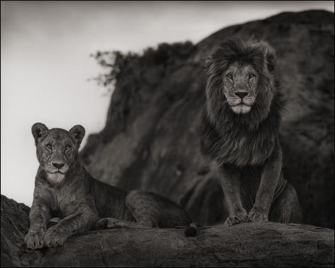 nick brandt Lion Couple, Serengeti, 2010