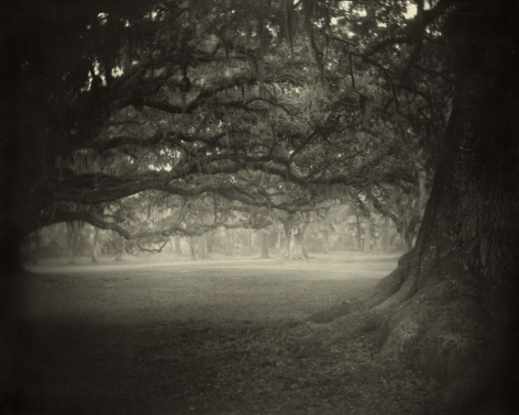 Sally Mann, Deep South, Untitled (Fontainebleau), 1998
