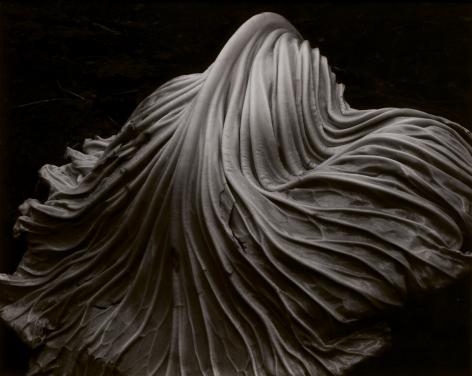 Edward Weston, Cabbage Leaf