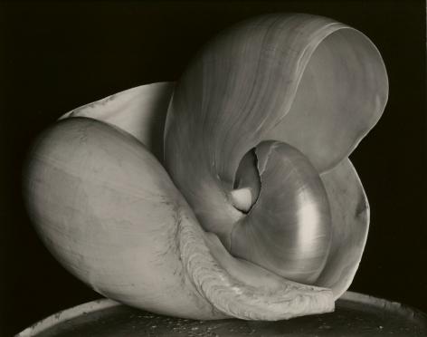 Edward Weston, Two Shells, 1927