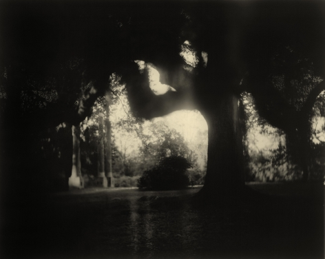 sally mann Deep South, Untitled (Scrim) (Deep South #04, Scritchy Moss Tree Columns)